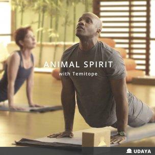 Programs Animal Spirit
