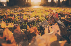 The Beauty of Letting Go and Guide to Loving Fall